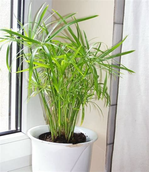 Plants that Grow without Sunlight   26 Best Plants to Grow