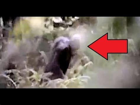 FRIGHTENED!! CAMPERS FILM A SCARY BIGFOOT ATTACK!! - (2016