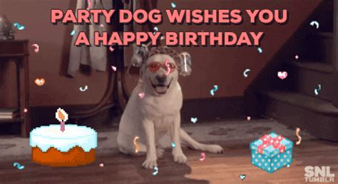 Party Dog GIFs - Find & Share on GIPHY