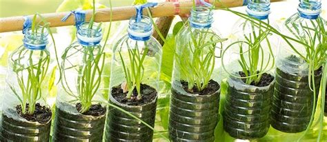 Plastic Bottles: Recycle or Repurpose? - The Permaculture