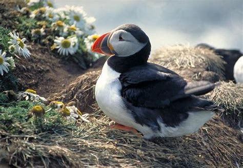 Iceland Facts for Kids   Geography   Attractions   Animals