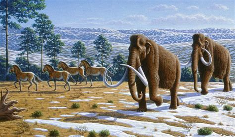 Ice Age Co-Stars: Horses, Camels, and Cheetahs - Science
